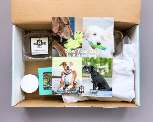 BoxDog Subscription Box Review + Coupon Code – July 2019
